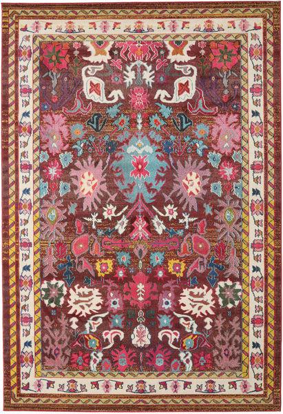 Mirzam - Ciemny Fioletowy Dywan 240X340 Nowoczesny Ciemnoczerwony/Brązowy ( Turcja)